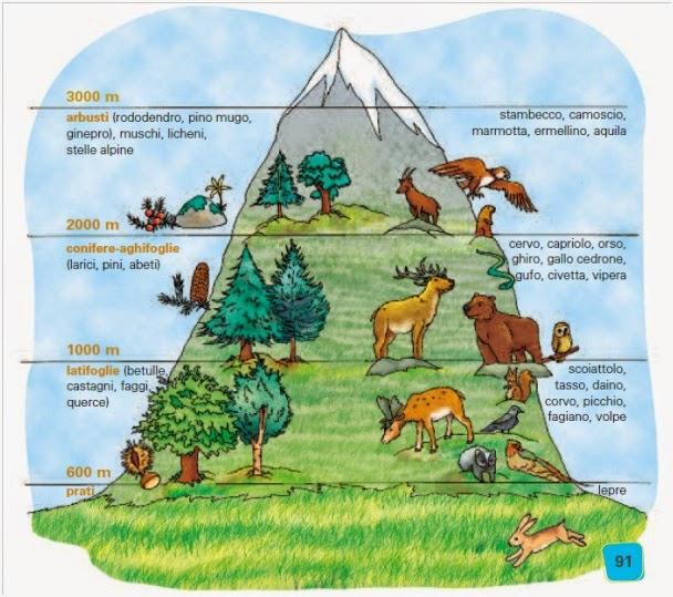 Flora e fauna della montagna.jpg